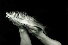 Japanese-Sea-Bass