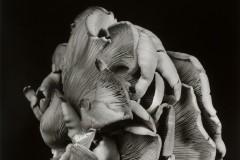 Oyster-Mushroom-3
