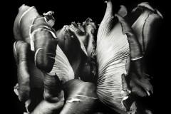 Oyster-Mushroom-37