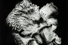 Oyster-Mushroom-47
