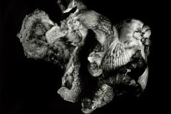 Oyster-Mushroom-51