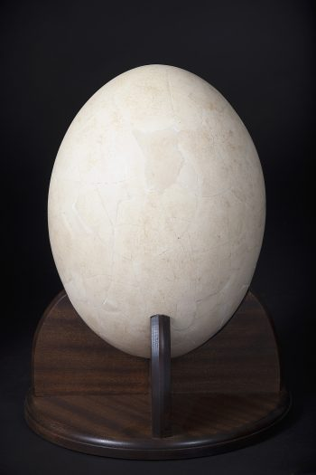 Elephant Bird egg Paris
