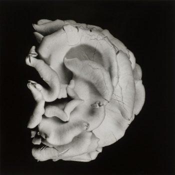 Oyster Mushroom 2