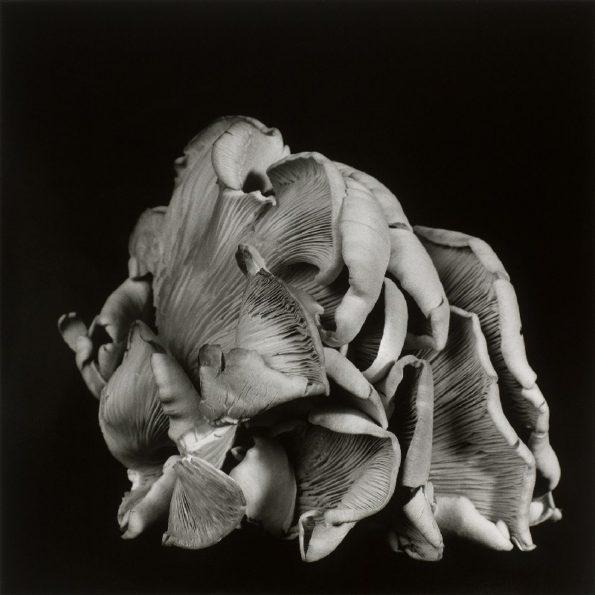 Oyster Mushroom No.03 2012
