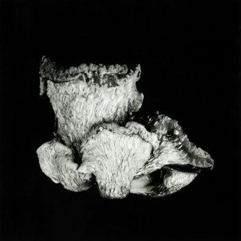 Oyster Mushroom 48