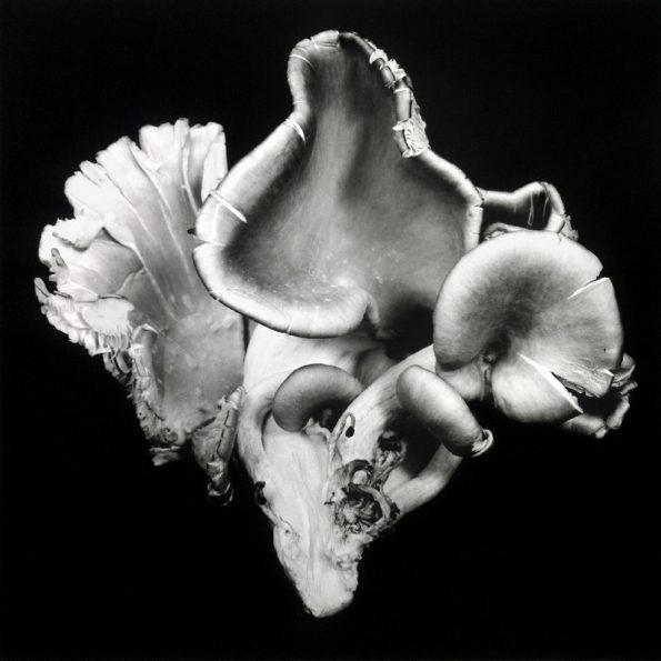 Oyster Mushroom No.06 2012